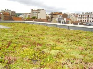 photo-toit-vegetalise-maison-contemporaine-clm-92